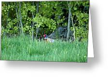 Hiding In The Grass. Pheasant Greeting Card