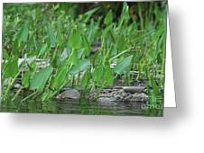 Hiding In The Weeds Greeting Card