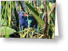 Hiding In The Wetlands Greeting Card