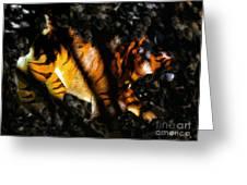 Hiding Tiger Greeting Card