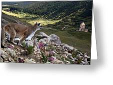High And Wild Greeting Card