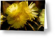 High Angle View Of Cactus Flowers Greeting Card