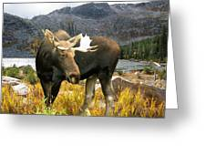 High Country Moose Greeting Card