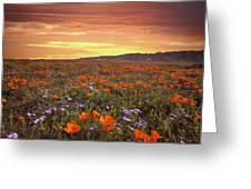 High Desert Sunset Serenade Greeting Card