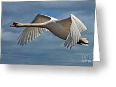 High Flying Greeting Card