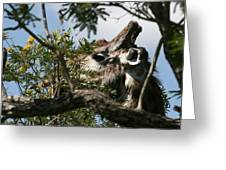 High In The Trees Greeting Card