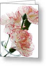 High Key Pink And White Carnation Floral  Greeting Card