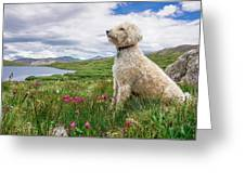 High Meadow With Eyes To The Sky Greeting Card