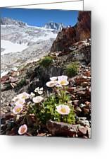 High Mountain Flowers Greeting Card