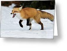 High Speed Fox Greeting Card