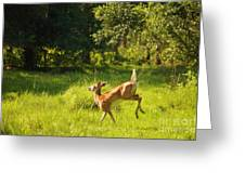 High Tailing It Greeting Card