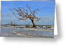 High Tide On Driftwood Beach Greeting Card