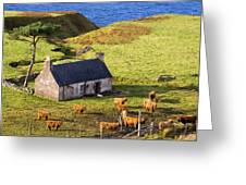 Highland Cottage With Highland Cattle Greeting Card