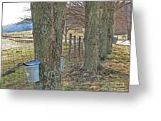Highland County Va Virginia - Monterey - Mcdowell - Maple Harvest Greeting Card