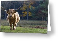 Highland Cow In France Greeting Card