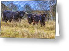 Highland Family Greeting Card