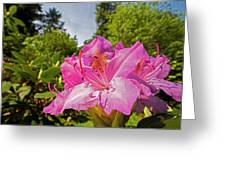 Highland Park Garden Rochester Ny Purple Flower Greeting Card