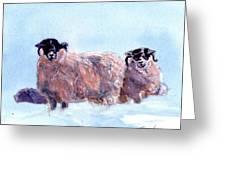 Highland Sheep Greeting Card