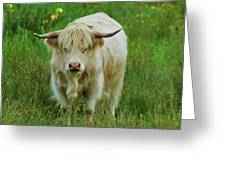 Highland White  Greeting Card