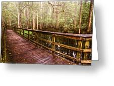 Highlands Hammock Greeting Card