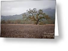 Highway Oak Greeting Card by Derek Selander