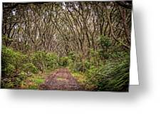 Hiking On Rangitoto New Zealand Greeting Card