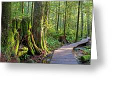 Hiking Trail Through Forest In Lynn Canyon Park Greeting Card