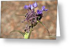 Hill Country Flower Greeting Card
