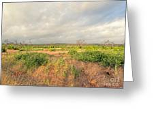Hill Country Memories Greeting Card