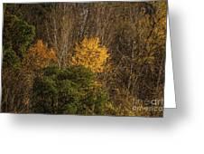 Hillside Autumn Greeting Card