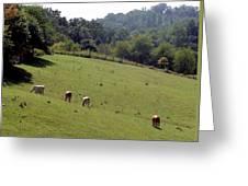 Hillside Grazing Greeting Card