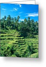 Hillside In Indonesia Greeting Card