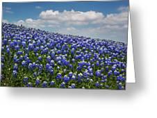 Hillside Texas Bluebonnets Greeting Card