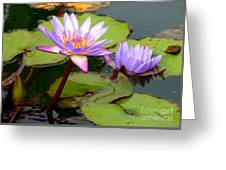 Hilo Water Lily 2 Greeting Card