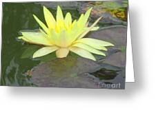 Hilo Water Lily 4 Greeting Card