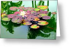 Hilo Water Lily 5 Greeting Card