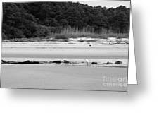 Hilton Head Island Shoreline In Black And White Greeting Card