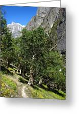 Himalayan Bhojpatra Trees 4 Greeting Card