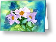 Himalayan Poppies Greeting Card