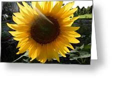 Hint Of Sunlight Greeting Card