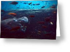 Hippo Eating African Cichlids Greeting Card