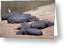 Hippo Heaven Greeting Card