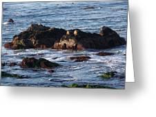 Hippo Rock Greeting Card