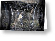 His Hideout Greeting Card