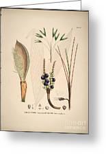 Historia Naturalis Palmarum Greeting Card