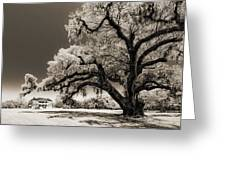 Historic Drayton Hall In Charleston South Carolina Live Oak Tree Greeting Card by Dustin K Ryan
