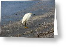 Hitchcock Snowy Egret Greeting Card