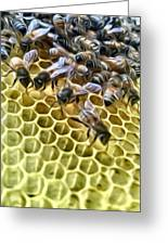 Hive Greeting Card