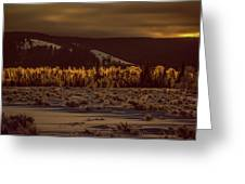 Hoar Frost In Dawn's Light Greeting Card