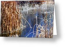 Hoar Frost On Reeds Greeting Card